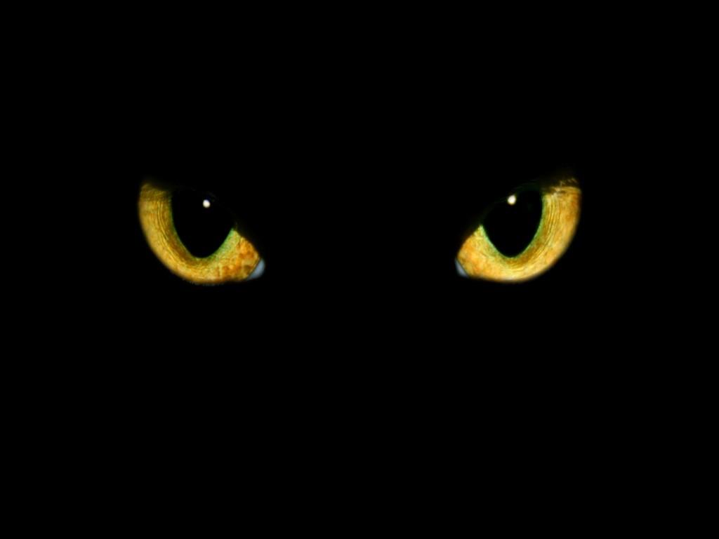Read & Listen: The BlackCat
